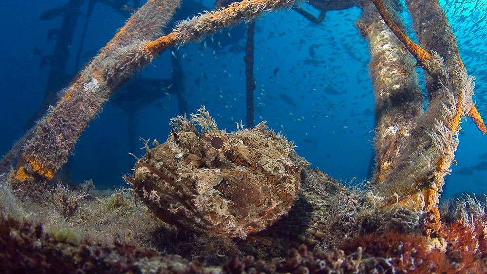 Plongée en mer de Cortez, Mexique
