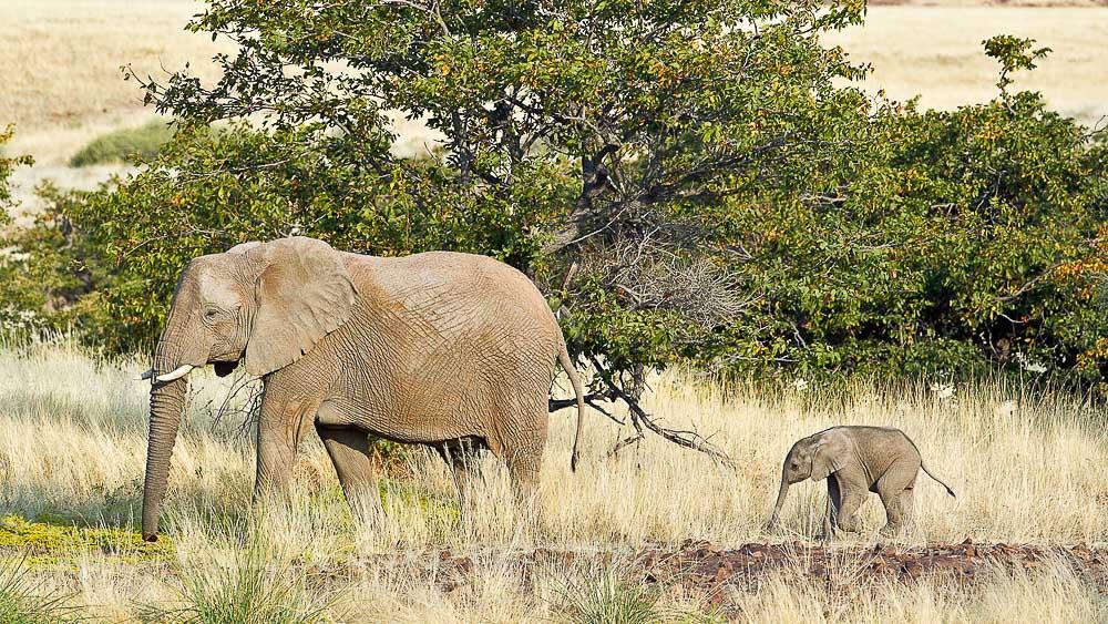 Desert Rhino Camp, Namibie © Caroline Culbert