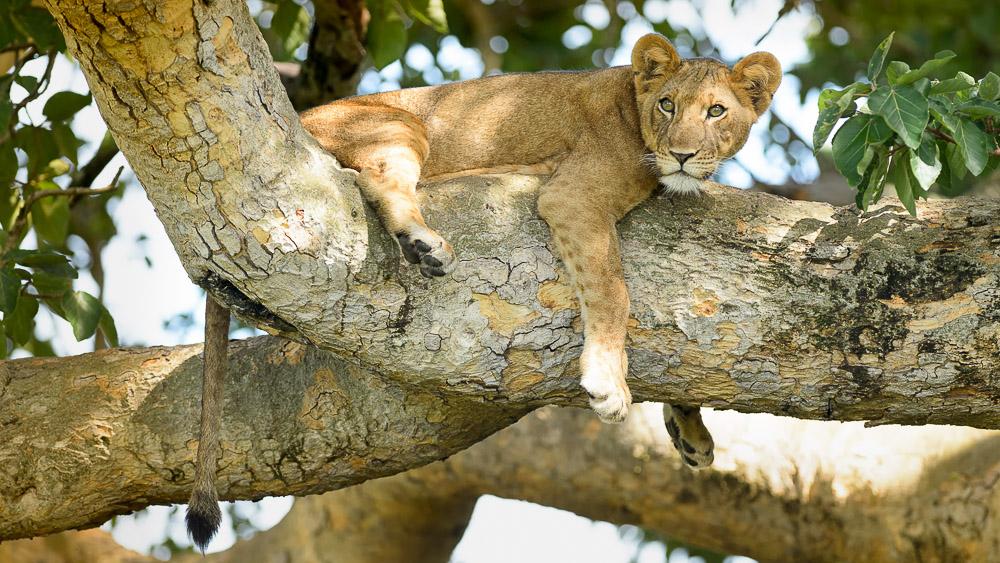 Parc Queen Elizabeth, Ouganda