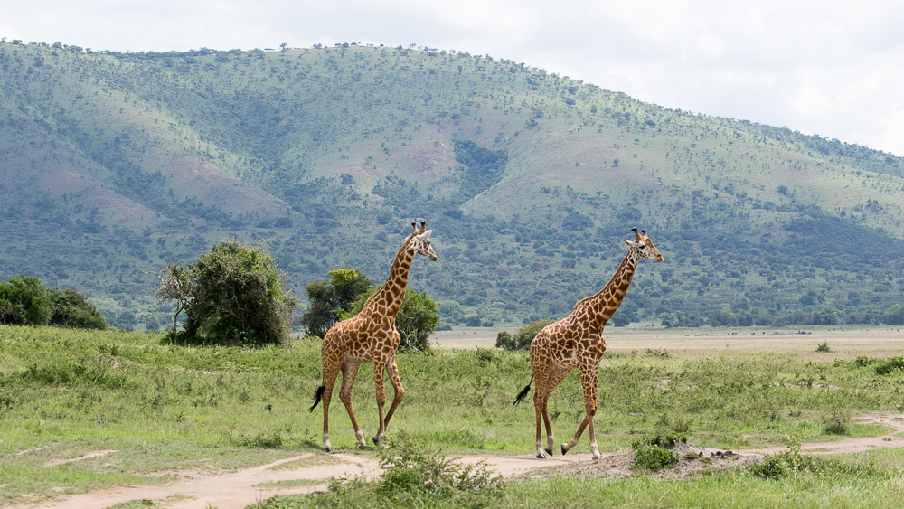 Parc de Akagera, Rwanda