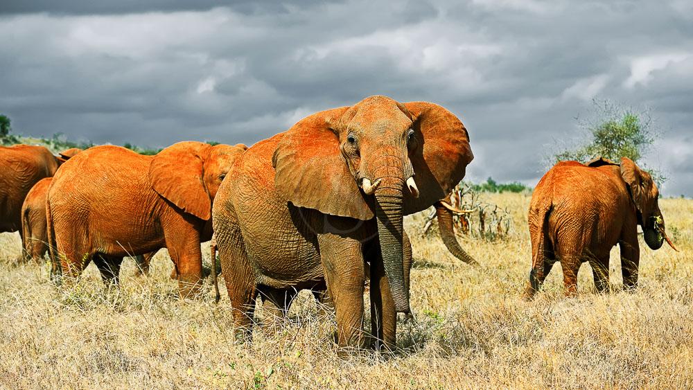 Tsavo Est, Kenya