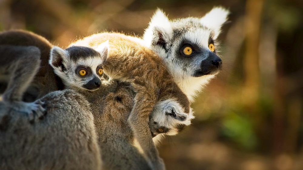 Ambiance de Madagascar
