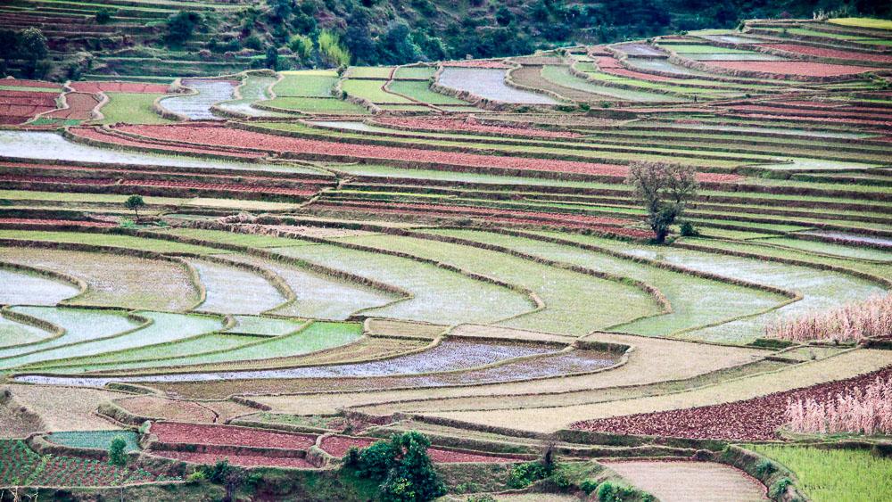 Cultures en terrasse vers Antsirabe, Madagascar