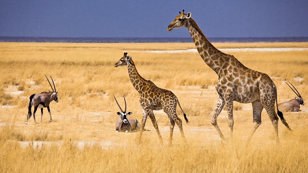 Mokuti Etosha Lodge, Namibie © Reinhard Westphal