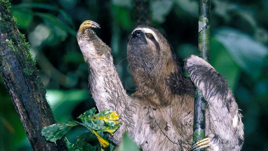 Manu Wildlife Center, Pérou
