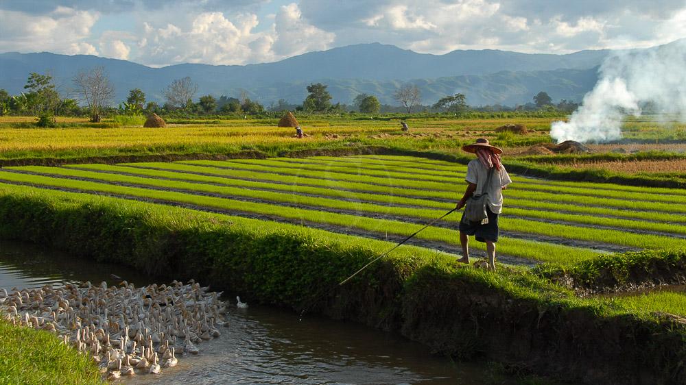 Vie rurale sur la rivière Bago, Myanmar