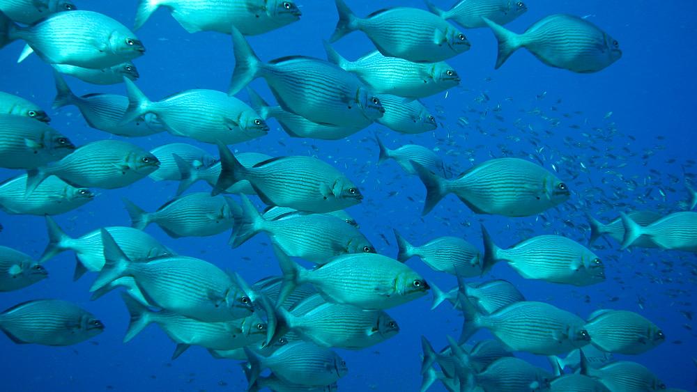 Plongée en mer de Cortez, Mexiquer