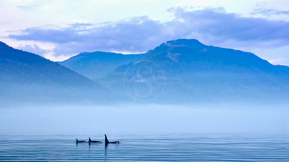 Ile de Vancouver, Canada