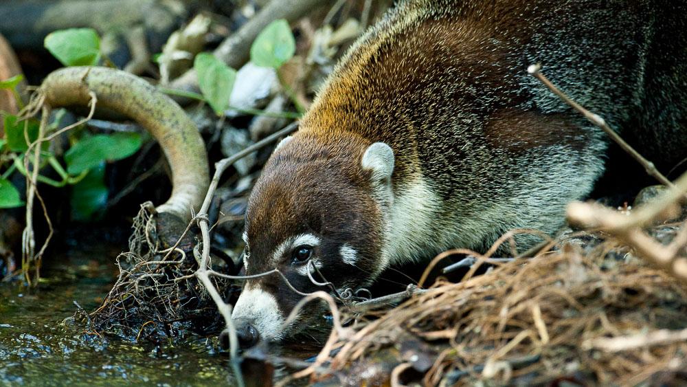 Rincon de la Vieja, Costa Rica © L. Guillot / Etendues Sauvages