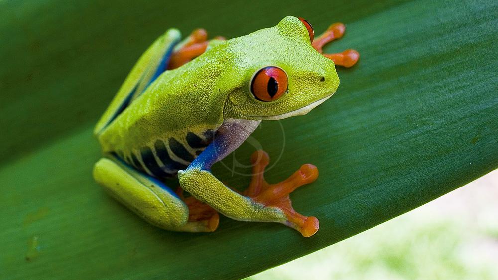 Costa Rica © Shutterstock