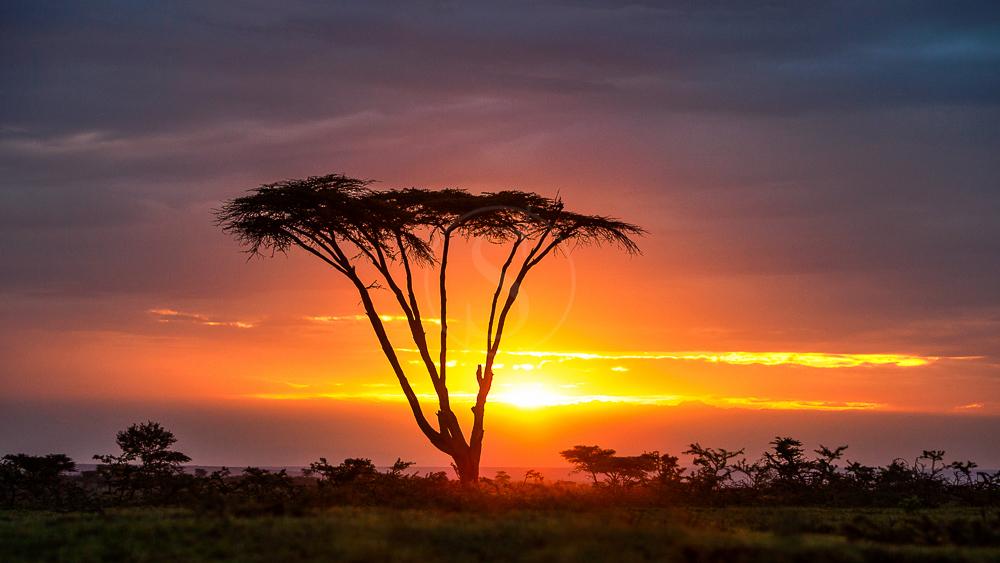 Sanctuary Olonana, Kenya