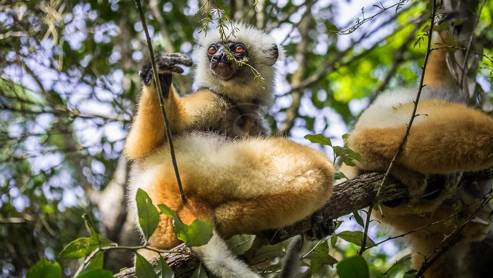 Parc de Andasibe, Madagascar