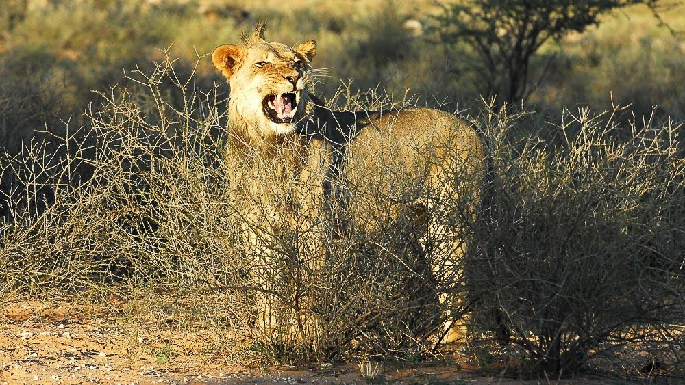 Safari à Etosha, Namibie