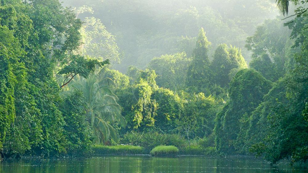 Rio Sirena à Corcovado, Costa Rica
