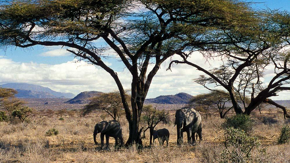 Safari à Samburu, Kenya © &Beyond / Ron Magill