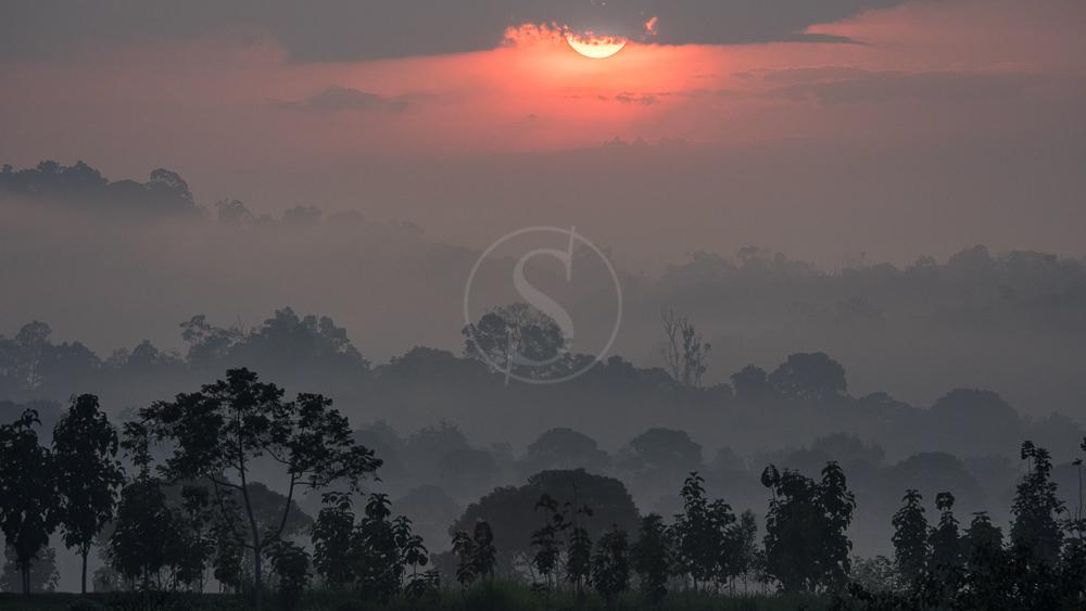 Lever du jour sur la forêt de Kibale, Ouganda