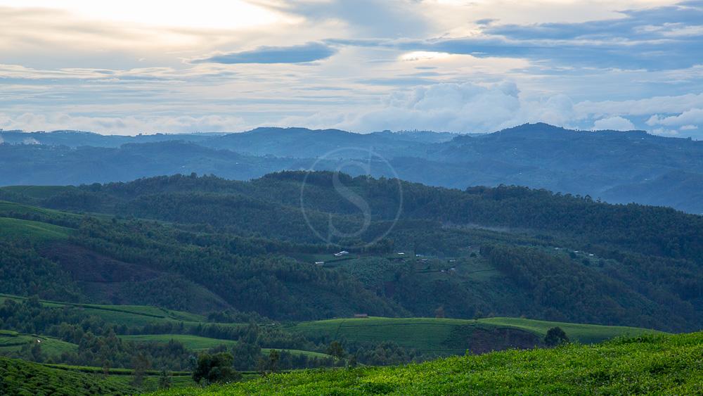 09rwanda_lg_nyungwe_009