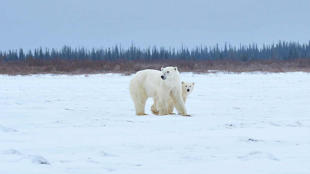 Nanuk Polar Bear Lodge, Canada © Churchill Wild