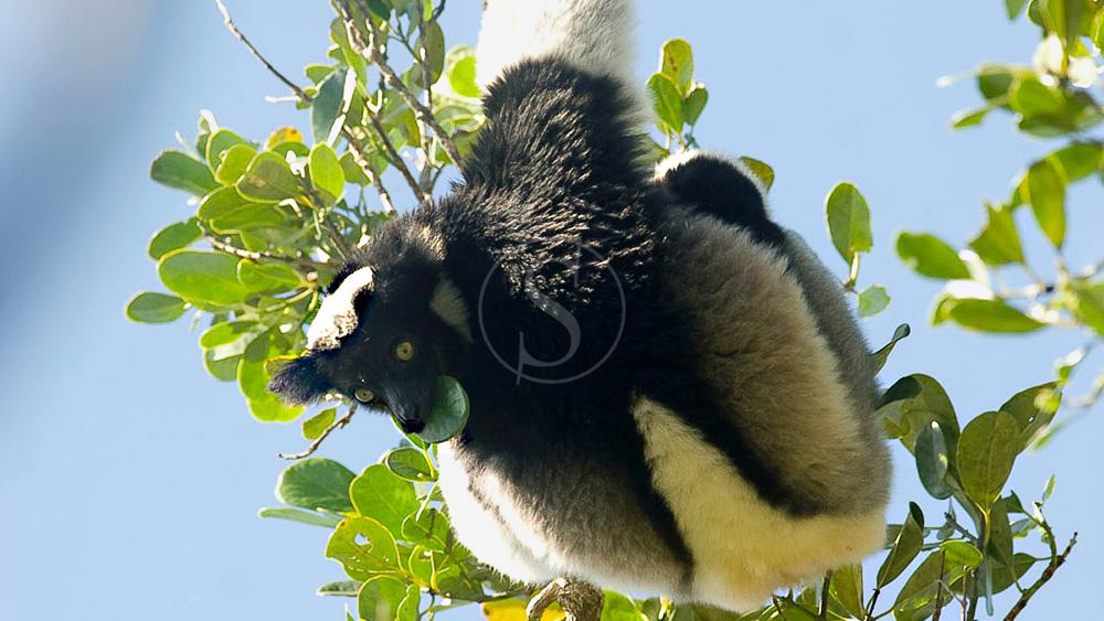 Faune de Madagascar / © Eric Jouaux