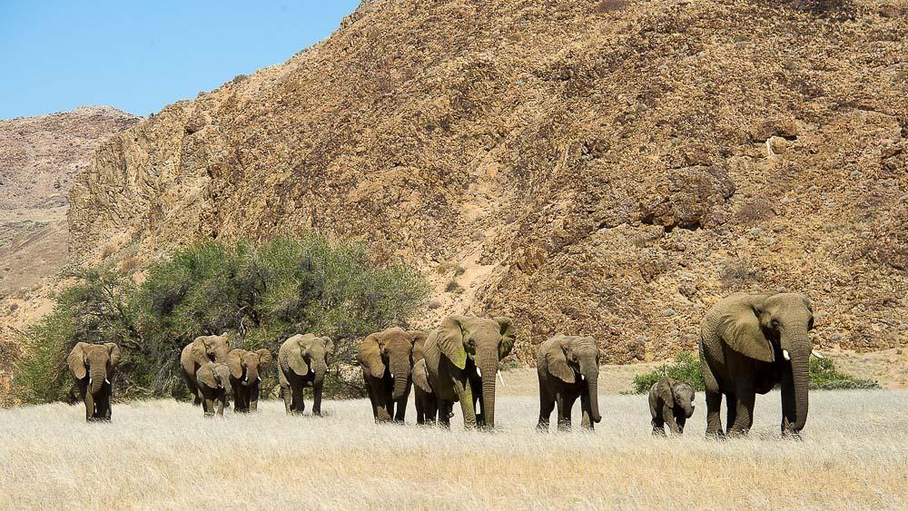 Doro Nawas, Namibie © Dana Allen - Wilderness