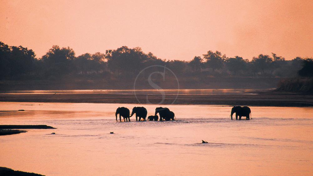 Nsefu Camp, Zambie © Robin Pope Safaris