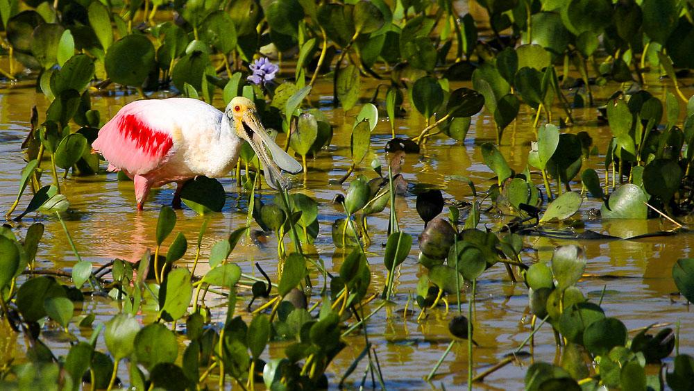 Caiman Lodge, Pantanal, Brésil © Caiman Lodge