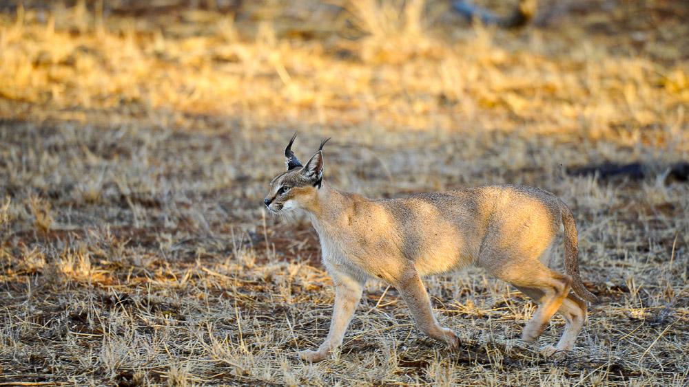 Safari au Kenya © Sonia Rousseau