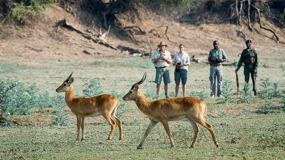 Luangwa Safari House, Zambie © Robin Pope Safaris