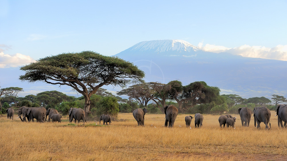 Ambiance d'Amboseli, Kenya
