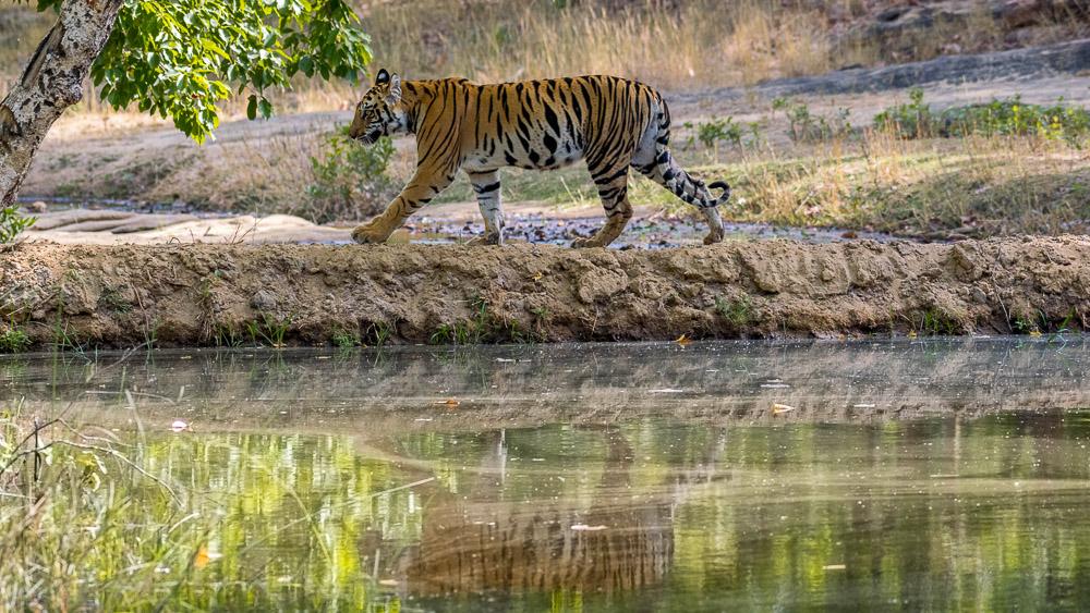 Parc de Nagarhole, Inde