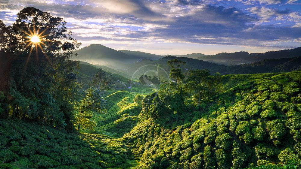Ambiance des Cameron Highlands, Malaisie