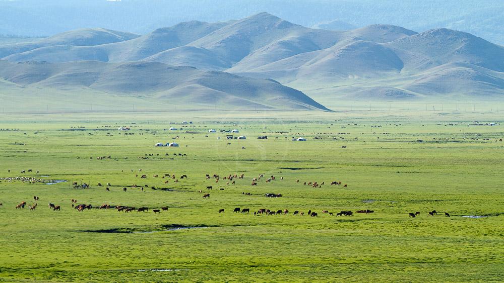 Ambiance de la steppe mongole, Mongolie