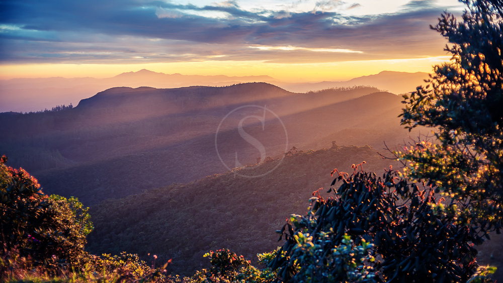 Parc national de Horton Plains, Sri Lanka © Shutterstock
