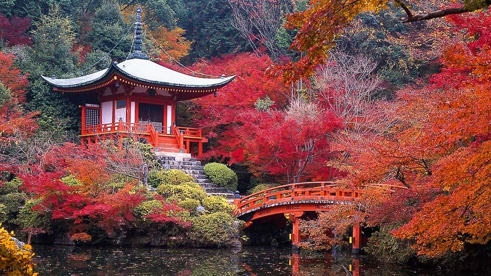 Ambiance d'automne, Japon © jnto
