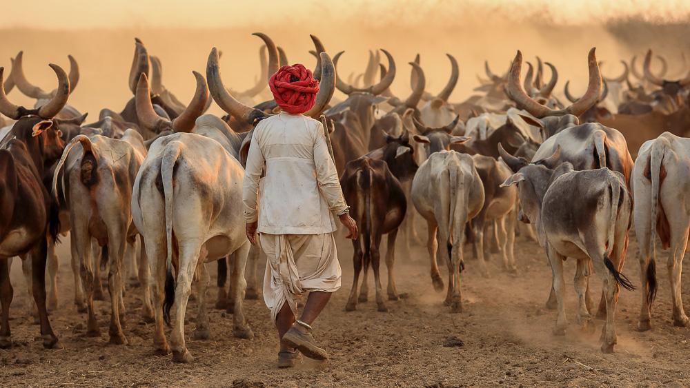 Région de Kutch, Inde