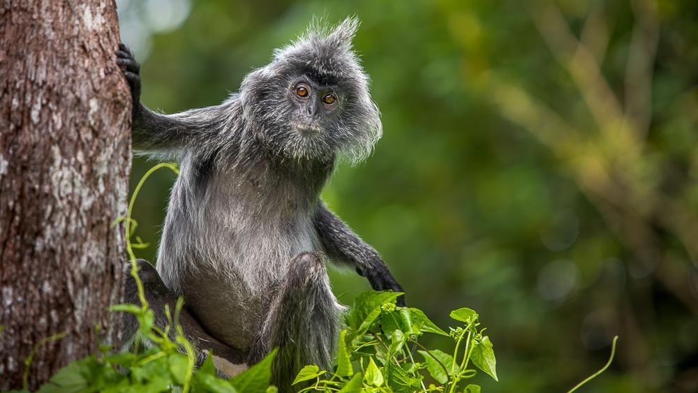 Parc national de Bako, Malaisie