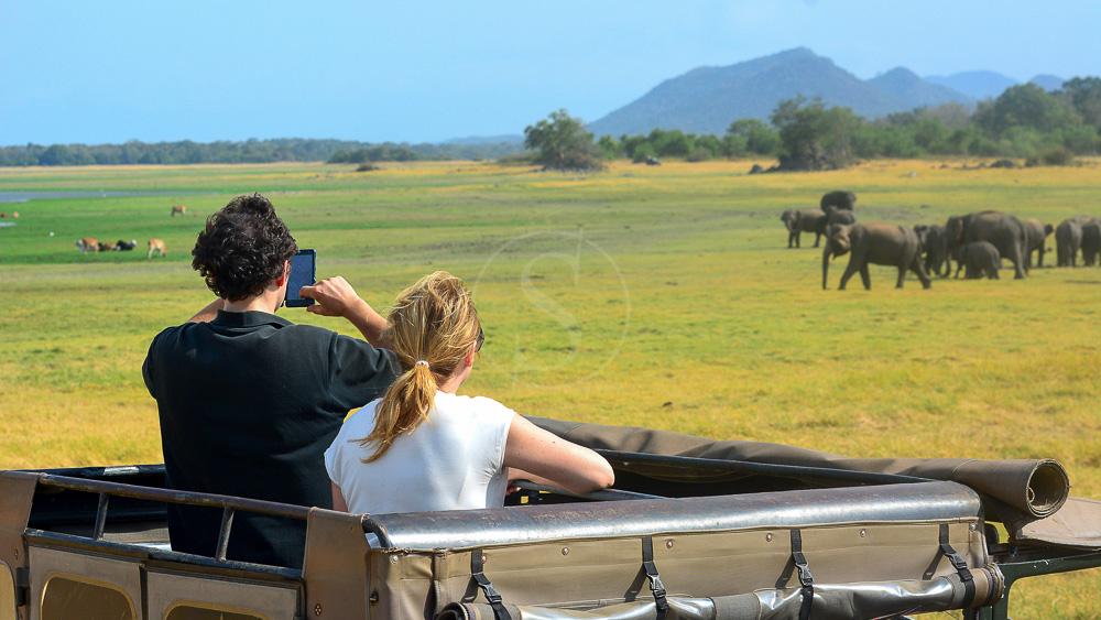 Eléphants à Minneriya, Sri Lanka© Shutterstock