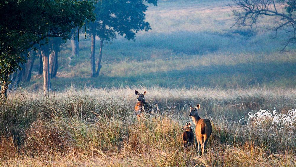 Safari dans le parc de Kanha, Inde