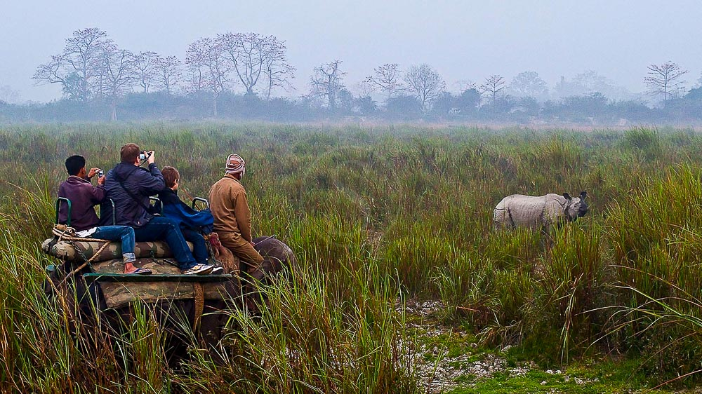 Safari à dos d'éléphant à Kaziranga, Inde © Gilles Georget