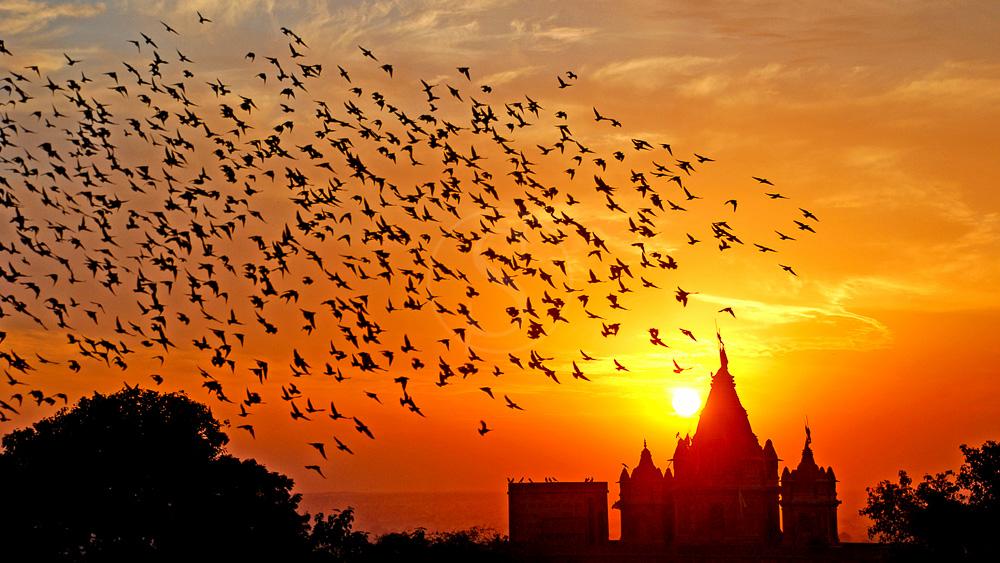 Bikaner, Inde