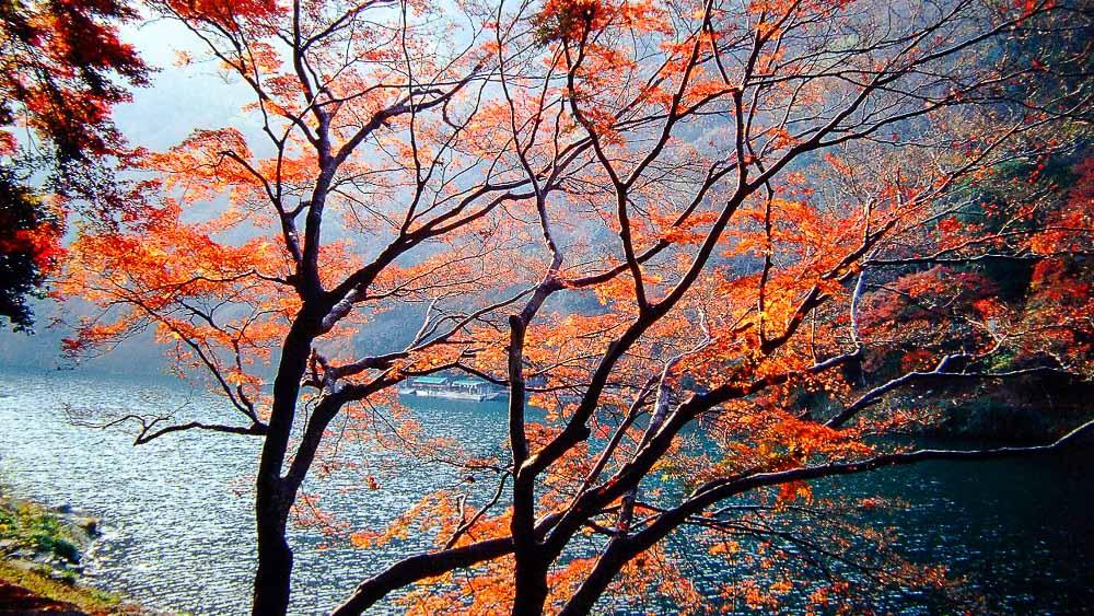 Couleurs d'automne à Kyoto, Japon © jnto