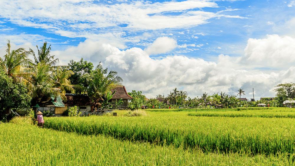 Rizières vers Umalas, Bali, Indonésie