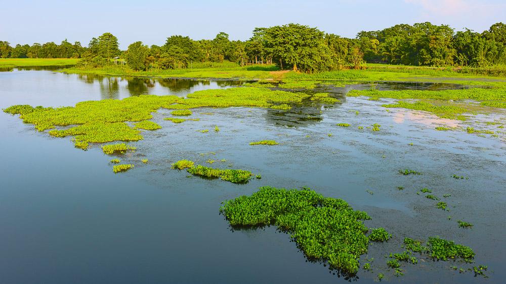 Île de Majuli dans l'Assam, Inde