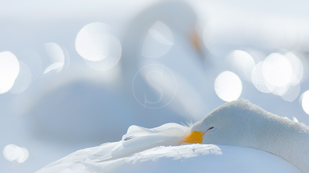 Ambiance d'Hokkaido, Japon © shutterstock