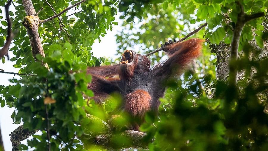 Bako National Park, Malaisie
