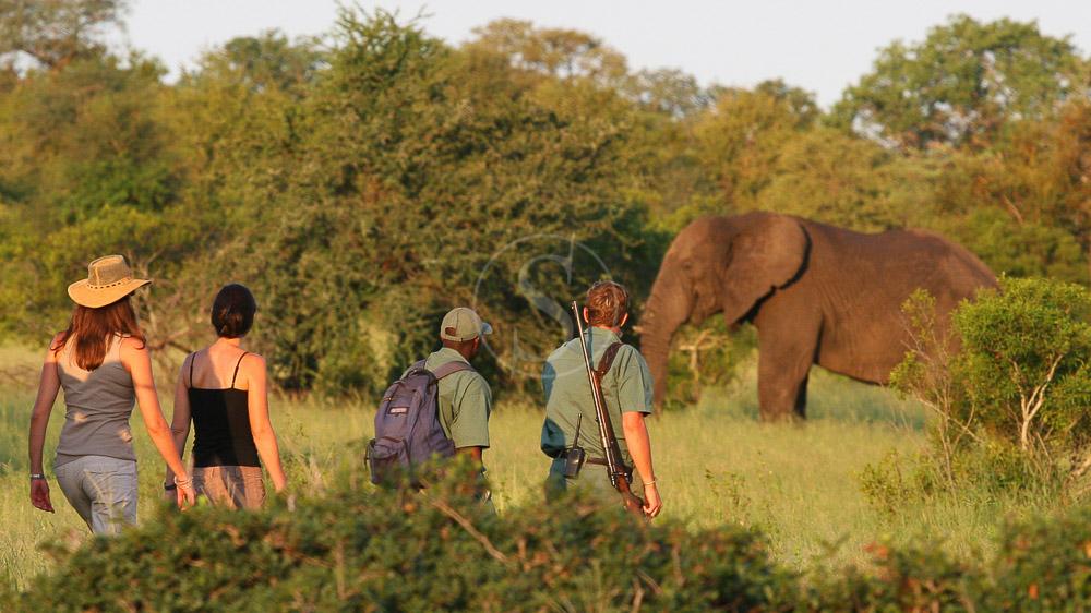 Rhino Plains Camp, Parc Kruger