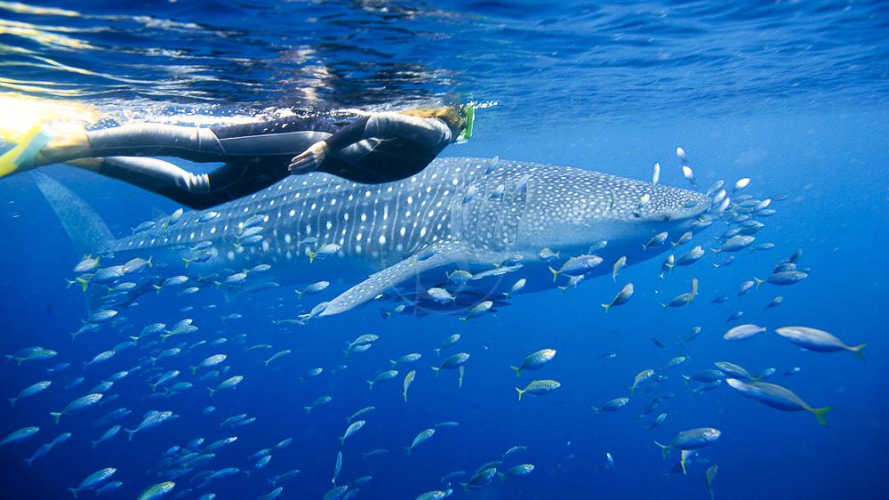 Ningaloo Reef, Australie © OT Australia