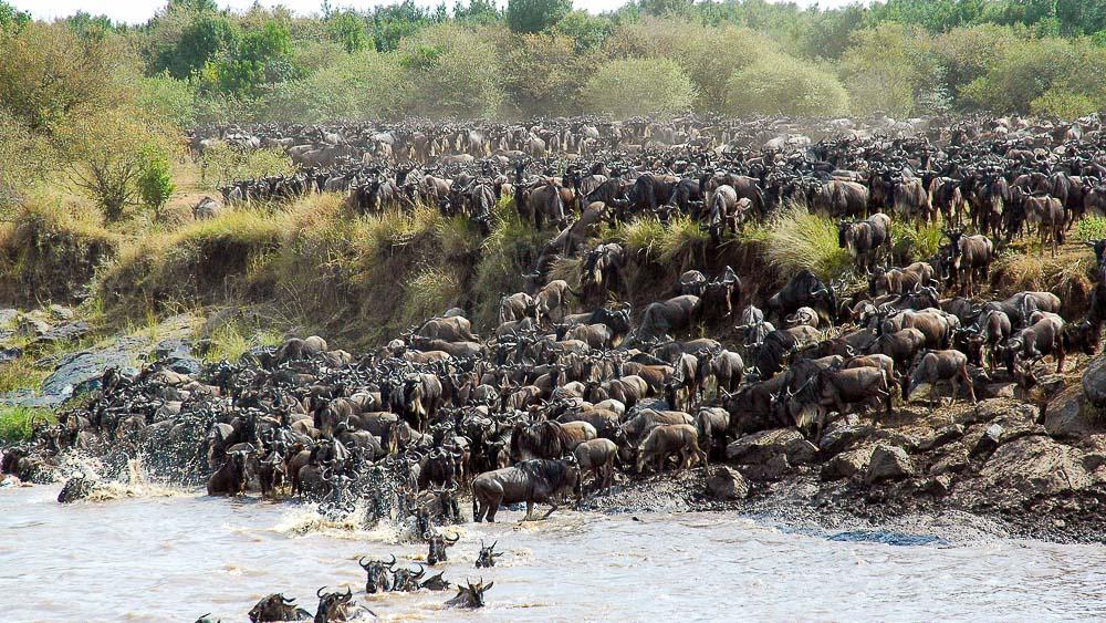 Safari en Tanzanie © &Beyond