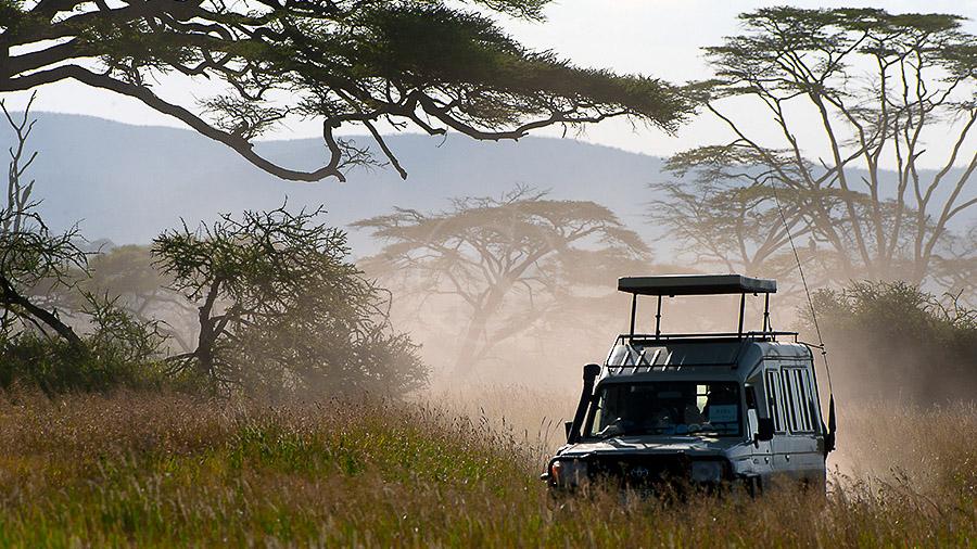 Ambiance de safari, Tanzanie © Alain Pons