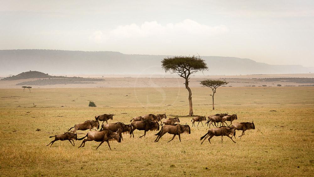 Sayari Camp, Tanzanie © Asilia - Eliza Deacon